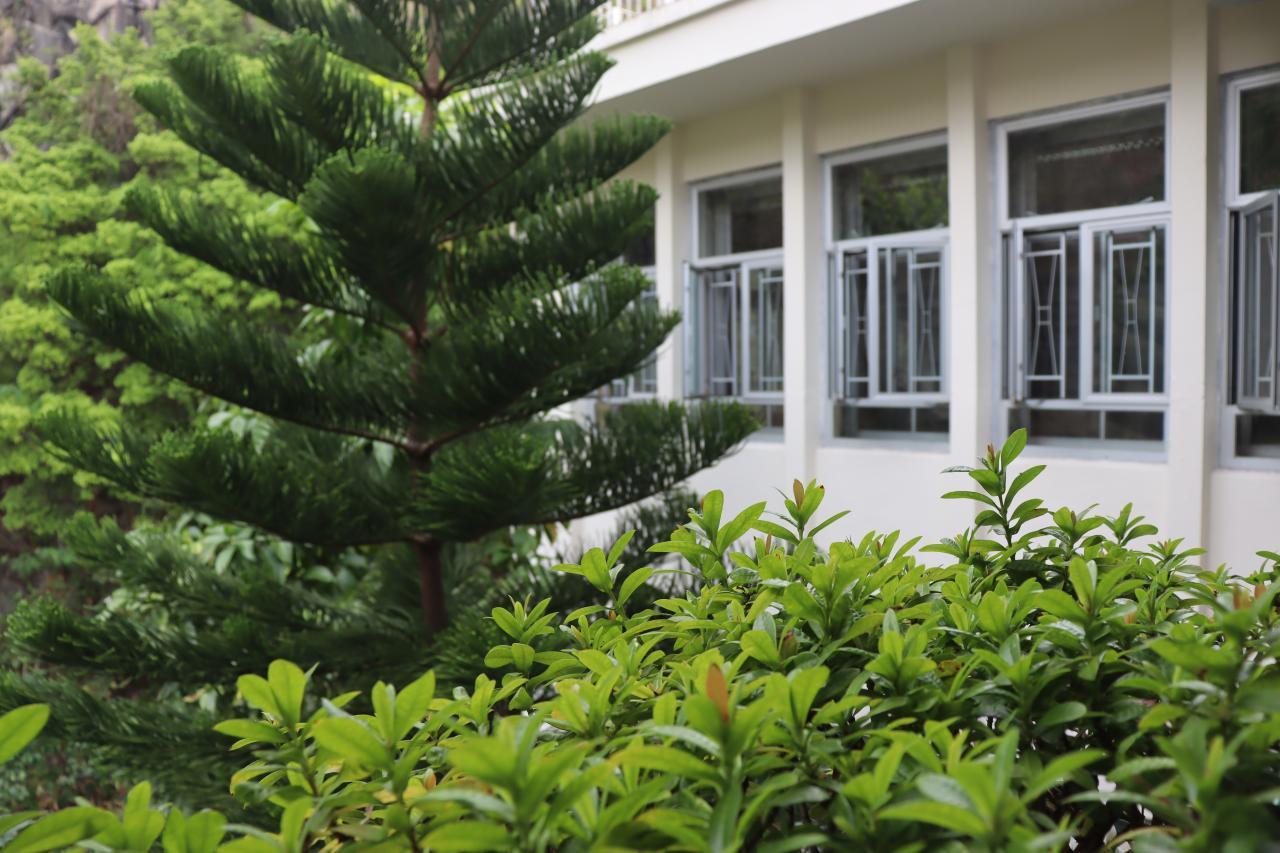 校內樹木景觀