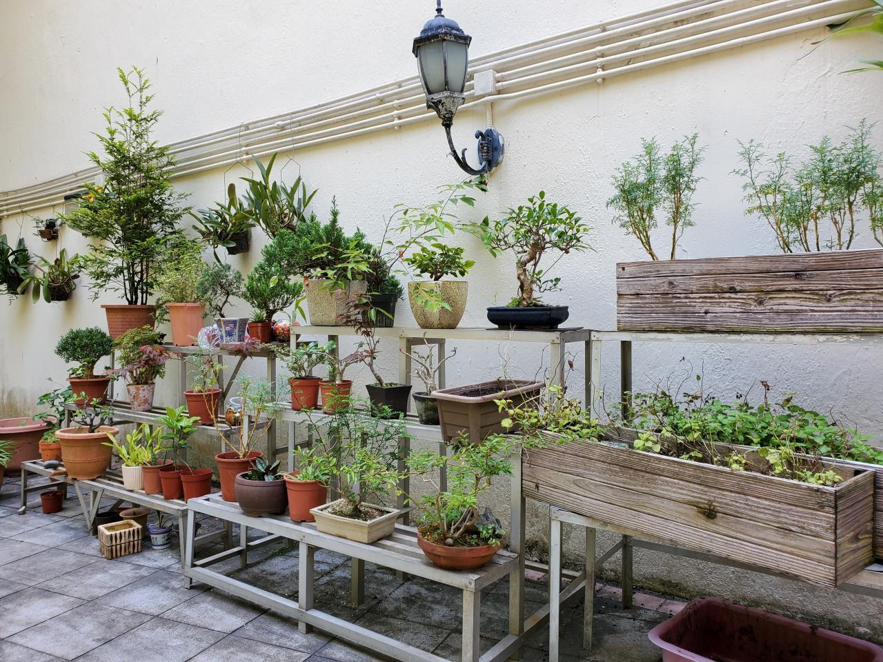 園藝組同學在此學習園藝知識